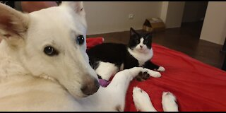 Kitty Living With Dog, Loving And Sleeping Together