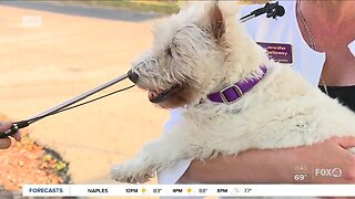 Shelter dogs available for adoption and fostering at Gulf Coast Humane Society