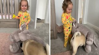 Little girl with infectious giggles plays with her pug
