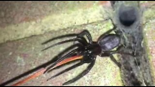 Hundreds of poisonous spiders invade house in England