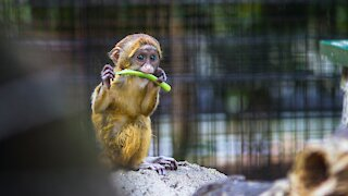 Everything about monkeys