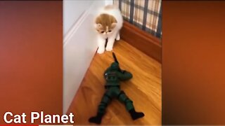 Funny Cats Vídeo Compilation 2021