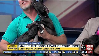 Pets of the week: Three cute 3-month-old puppies each need a forever home