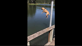 Dog Gets Serious Airtime While Diving Into Lake