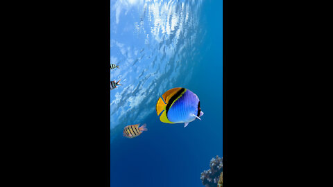 Beautiful Coral Reef Fish🐠🐬, Relaxing Ocean Fish🐬🐳🐠, & Stunning Aquarium Relax Music