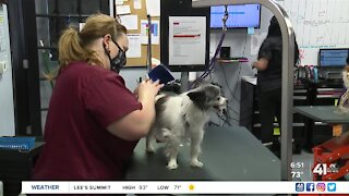Nonprofit teaches dog grooming