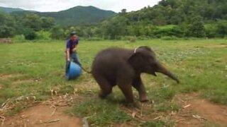 Avete mai sentito la risata di un elefante?