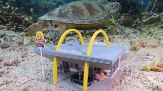 Kunstner skaper miniatyrlandskap under vann!
