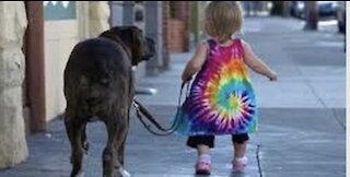 Smart dog #Dod #doglover