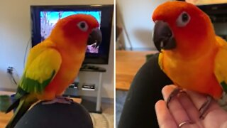 How to teach your bird the beginnings of recall training