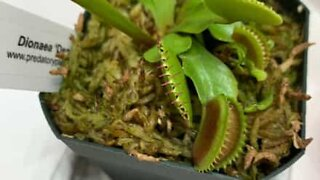 Watch this plant eat a spider