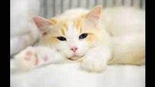 Vídeos engraçados de gatos Vídeos de gateway
