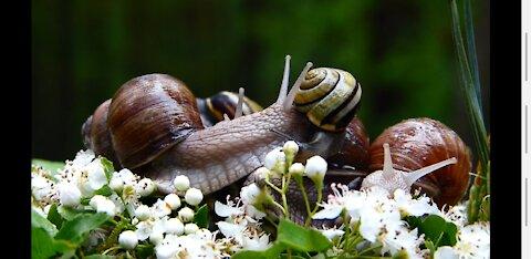 4K Beautiful Snails