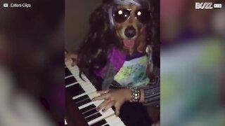 Golden Retriever suona il piano come un professionista!