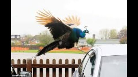 Run !!!!! Funny Angry birds 🤣