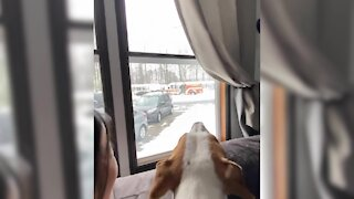 Festive dog howls with excitement to see Santa on a fire engine