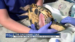 Dentist's clever idea helps mend turtle shell