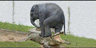 Amazing Elephant Saves Baby Elephant From Crocodile