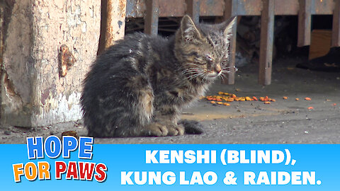Long edition + surgery: Blind kitten sits in a parking lot and wonders how will she survive in this world..