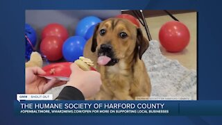 Good Morning Maryland from the Humane Society of Harford County
