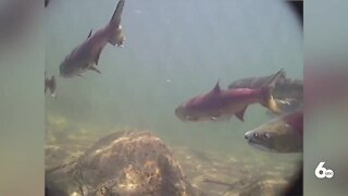 Latest Salmon Workgroup Recommendations