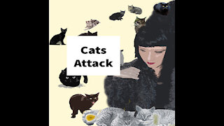 Cats Attack My Car