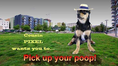 Pick up your poop!