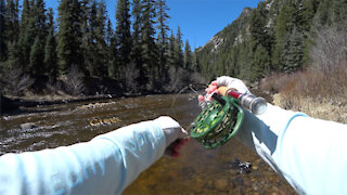 Early Spring, Creek Fishing! - Beautiful place! - McFly Angler Episode 46