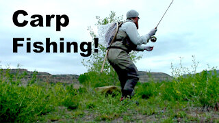 Carp Fishing Again! - McFly Episode 19