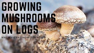 How to Grow Mushrooms on Logs