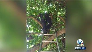 Palm Beach County Fire Rescue crews rescue pet cockatiel stranded in tree