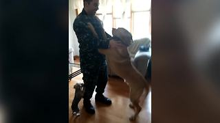 Dogs Welcome Home Their Human Friend Back From The Navy
