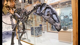 Dinosaur skeletons at Oxfords Museum of Natural History