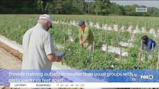 Farmers prepare for harvest season and Covid-19