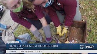 CROW rescues bobcat