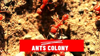 Ants Community Working Together