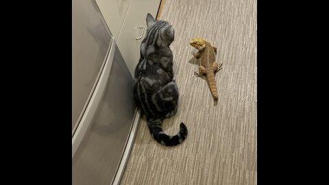 Beard dragon is happy, but Maribu the cat is confused.