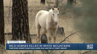 Wild horses killed in White Mountains