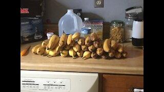 Backyard Bananas