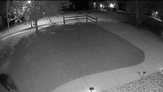WATCH: Black bear spotted in Johnson Creek neighborhood