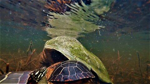 Turtle Orgy