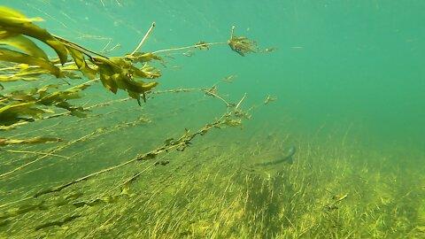 Big Fish Underwater