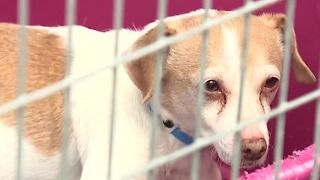 Animal foundation has recovered 190 animals since July 4