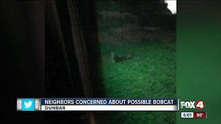 Dunbar neighbors concerned about possible bobcat