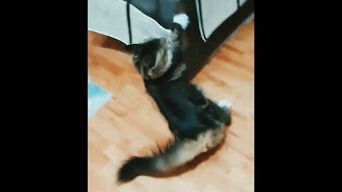 My silly cat Keeps failing at parkour and its spectacular