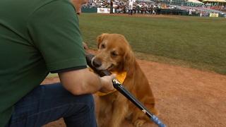 Derby & Rookie: The Trenton Thunder Baseball Batdogs