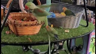 Birds riding birds compilation