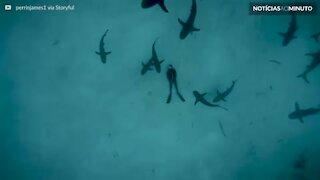 Mergulhador deita no fundo do mar repleto de tubarões