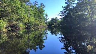 Bayou Cane, Fontainebleau State Park