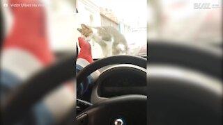 Cerca di spaventare il gatto, ma spacca il vetro dell'auto